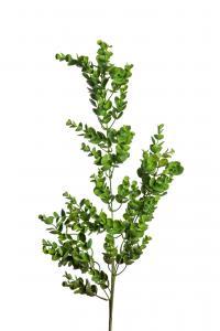 Mr Plant Eucalyptus - Grön - 95 cm
