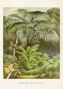 Poster - Vintage - Palm - 50x70 cm - www.frokenfraken.se