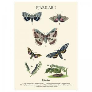 Vykort - Fjärilar - 21 x 15 cm - www.frokenfraken.se