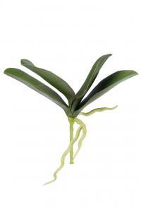 Phalaenopsis blad - Grön - 18 cm - www.frokenfraken.se