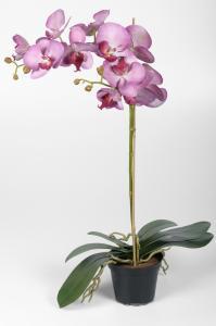 INTE_HA_Phalaenopsis - Lila - 60 cm - www.frokenfraken.se
