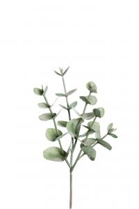 Eucalyptus - Grön - 24 cm - www.frokenfraken.se