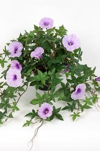 Mr Plant Blomma för dagen - Lila - 45 cm - www.frokenfraken.se