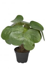 Mr Plant Elefantöra - Grön - 25 cm