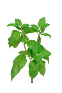 Mr Plant Basilika - Konstgjord på kvist - 25 cm