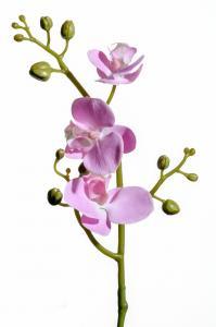 Phalaenopsis - Rosa - 50 cm - www.frokenfraken.se