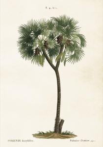 Poster - Vintage - Palm - 35x50 cm - www.frokenfraken.se