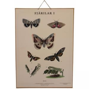 Grunne Skolplansch - Fjärilar - Monterad