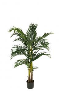Kentia Palm - 110 cm - www.frokenfraken.se