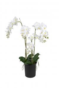 Phalaenopsis - Vit - 130 cm - www.frokenfraken.se