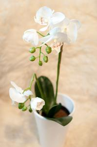 Mr Plant Phalaenopis - Orkidé Vit - Konstväxt - 42 cm