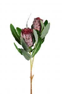 Protea - Lila - 80 cm - www.frokenfraken.se