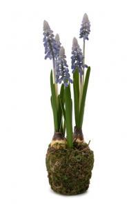 Pärlhyacint - Blå - Konstväxt - 25 cm - www.frokenfraken.se