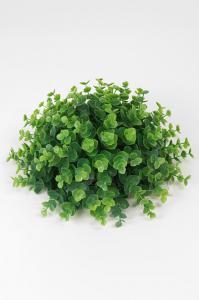 Mr Plant Eucalyptus - Grön - 12 cm