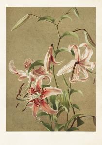 Poster - Vintage - Lilja - 35 x 50 cm - www.frokenfraken.se
