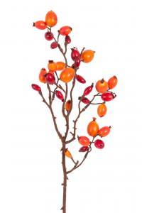 Nypon - Orange - 43 cm - www.frokenfraken.se