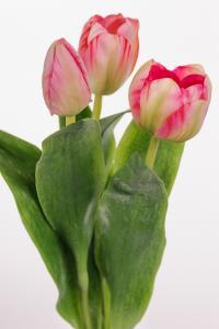 Tulpan mix - 3 st - Rosa - 36 cm - www.frokenfraken.se