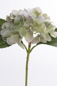 Mr Plant Hortensia - Blå - 25 cm - www.frokenfraken.se