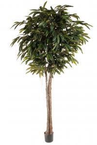 Longifolia - - 260 cm - www.frokenfraken.se