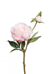 Mr Plant Pion - Rosa - 35 cm - www.frokenfraken.se