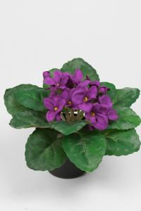 Mr Plant St. Paula - Lila - 15 cm
