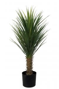 Yucca Rostrata - - 100 cm - www.frokenfraken.se