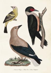 Poster - Vintage - Fåglar - 35 x 50 cm - www.frokenfraken.se