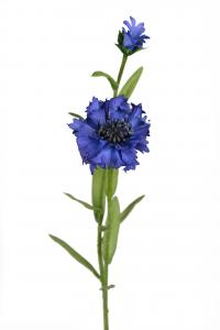 Blåklint - Blå - 58 cm - www.frokenfraken.se