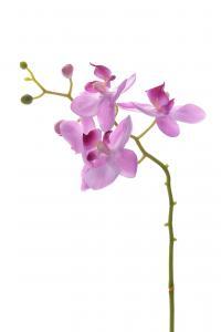 Phalaenopsis - Lila - 28 cm - www.frokenfraken.se