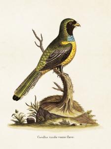 Poster - Vintage - Fågel på stubbe - 18 x 24 cm - www.frokenfraken.se