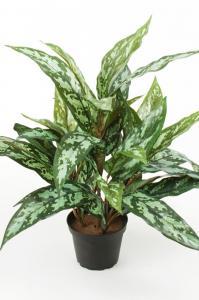 Mr Plant Aglonema - Grön - 45 cm