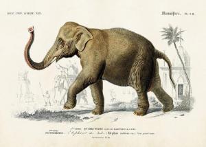 Poster - Vintage - Elefant - 70x50 cm - www.frokenfraken.se