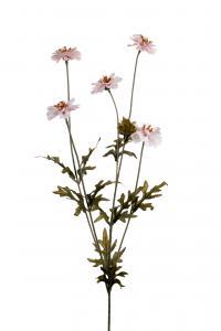 Coreopsis - Rosa - 75 cm - www.frokenfraken.se
