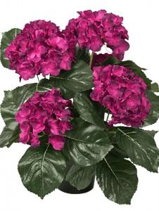 Mr Plant Hortensia - Mörklila - 37 cm