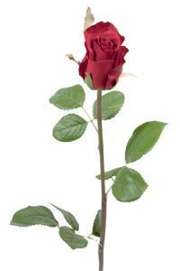 Mr Plant Ros - Mörkrosa sidenros - 50 cm