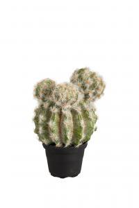 Kaktus - Grön - 20 cm - www.frokenfraken.se
