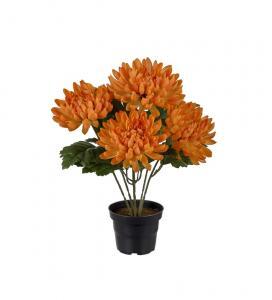 Chrysanthemum - Orange - 30 cm - www.frokenfraken.se