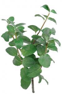Mr Plant Mynta