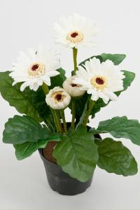 Mr Plant Gerbera - Vit - 25 cm