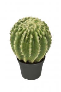 Kaktus - Grön - 23 cm - www.frokenfraken.se