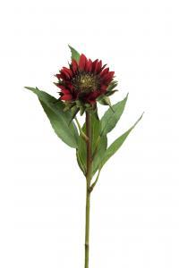 Mr Plant Solros - Röd - 65 cm