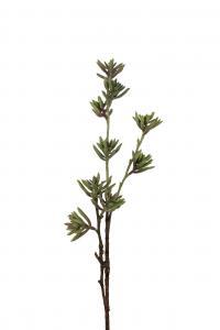 Succulent - - 75 cm - www.frokenfraken.se
