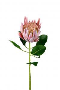 Protea - Rosa - 70 cm - www.frokenfraken.se