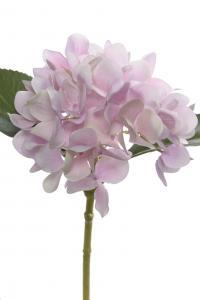 Mr Plant Hortensia - Rosa - 25 cm - www.frokenfraken.se