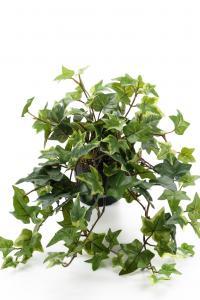 Mr Plant Murgröna - Grön - 25 cm