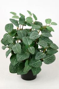 Mr Plant Fittonia - Grön - 34 cm
