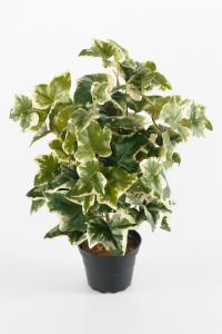 Mr Plant Murgröna - Grön - 40 cm