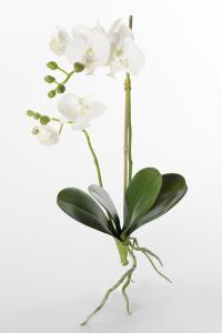 Phalaenopsis - Vit - 45 cm - www.frokenfraken.se